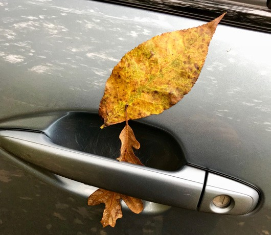 An autumn leaf makes its presence known on the Courier car. Photo by Douglas Cunningham